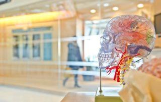 human-brain-health