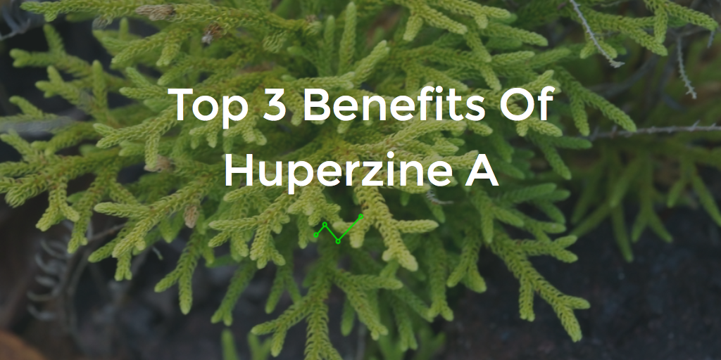 Top 3 Benefits Of Huperzine A – A Natural Nootropic Found In Plants